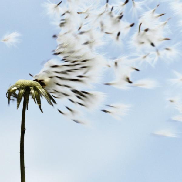 articolo vento